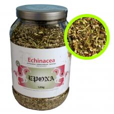Epona Echinacea